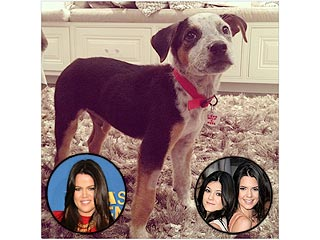 Khlo&#233;, Kendall & Kylie Get a New Rescue Dog | Kendall Jenner, Khloe Kardashian, Kylie Jenner