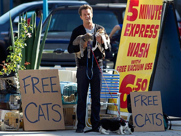 Matthew Perry Gets Feline Fever on Set| Cats, Go On, Matthew Perry