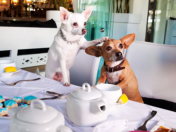 Giggy Throws Tea Party for Famous Friends| Stars and Pets, Dogs, Real Housewives of Beverly Hills, Lisa Vanderpump