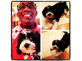 Al Roker Adopts Rescue Puppy Named Pepper