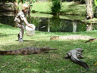 See Steve Irwin's 8-Year-Old Son – Feeding Crocodiles