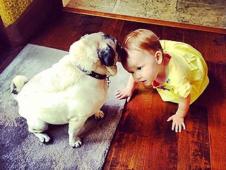 Cute Photo! Haven Warren Plays with Jessica Alba's Pug | Cash Warren, Jessica Alba