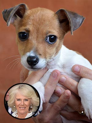 Camilla Parker Bowles Adopts a Puppy: Photo