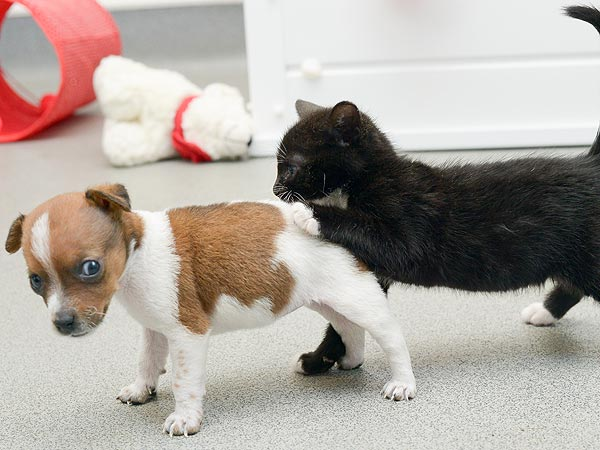 Abandoned Kitten and Puppy Are Unlikely BFFs| Animals & Pets, Baby Animals, Cats, Cute Pets, Dogs