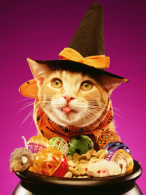 Petco 2012 Halloween Contest: Win $5,000
