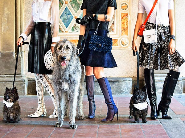 From Homeless to High Fashion! Rescue Dogs Pose for Town &#38; Country| Dogs, Pet Style