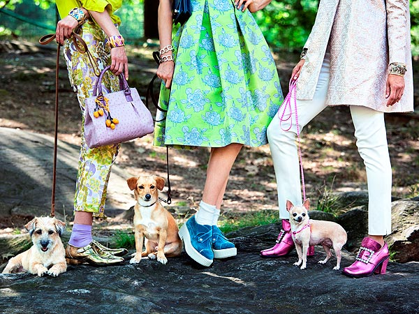 From Homeless to High Fashion! Rescue Dogs Pose for Town & Country