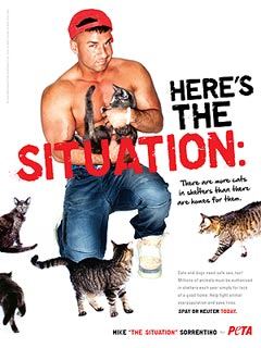 'The Situation' Takes His Shirt Off – for Kittens