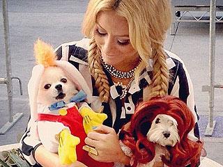 PHOTOS: Stars Dress Their Dogs for Halloween