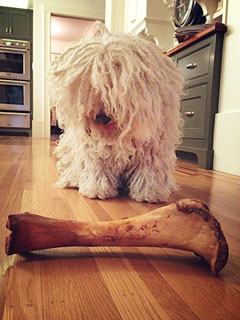 Beast Zuckerberg Gets a Big New Bone