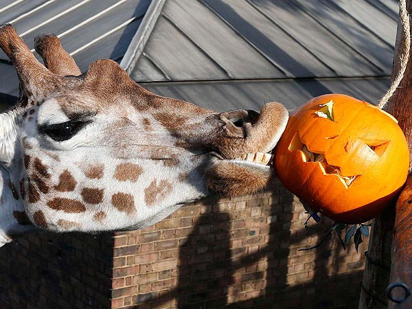 Boo at the Zoo! Animals Go Wild for Halloween