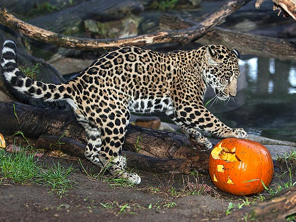 Boo at the Zoo! Animals Go Wild for Halloween| Zoo Animals