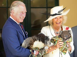 Camilla Parker Bowles Wants to Leave Australia &#8211; with a Koala!