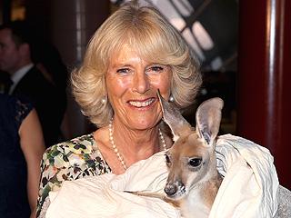 Camilla Says G'Day – to a Kangaroo! | Camilla Parker Bowles