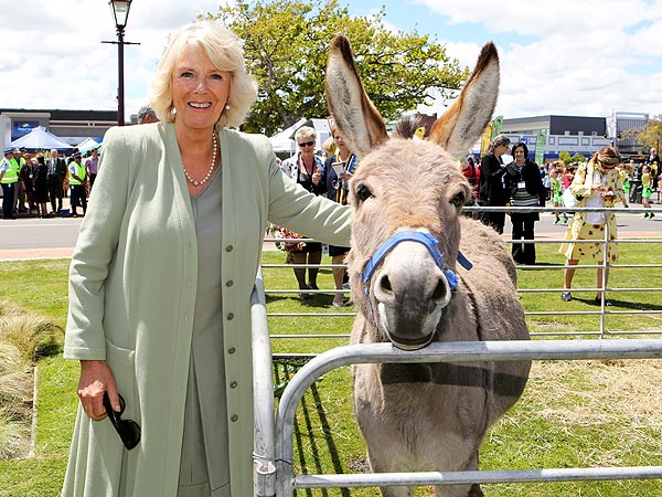 Camilla, Duchess of Cornwall, Meets a Kiwi Bird| Exotic Animals & Pets, Camilla Parker Bowles