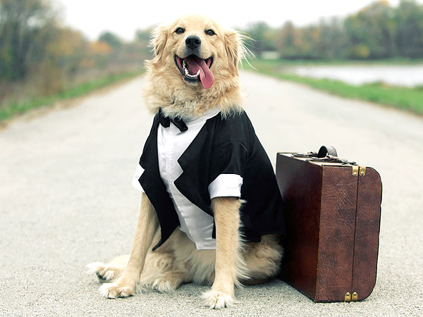 Traveling Pets Enjoy Amenities at Hotels, on Airlines