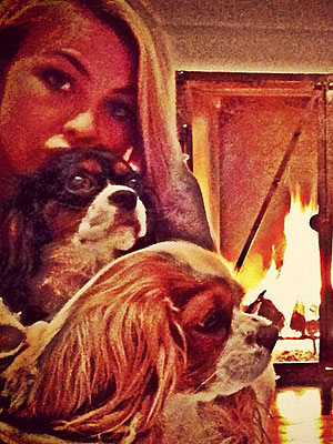 How Julianne Hough Keeps Her Dogs Close| Stars and Pets, Dogs, Julianne Hough