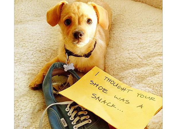 Lauren Conrad Dogshames Her New Puppy| Stars and Pets, Dogs, Lauren Conrad