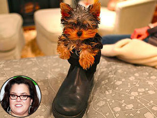 Squee! Rosie O'Donnell's New Puppy Fits in a Shoe | Rosie O'Donnell