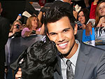 Taylor Lautner Meets Military Dog at Breaking Dawn Premiere | Taylor Lautner