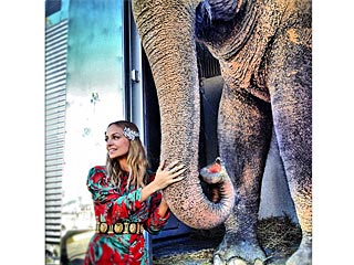 What Nicole Richie Has in Common with an Elephant | Nicole Richie