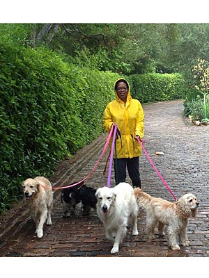 Oprah&#39;s Real Favorite Things? Her Dogs| Stars and Pets, Dogs, Oprah Winfrey