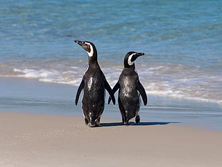 Meet the Ultimate Lovebirds: Penguin Couple Has Stayed Together for 16 Years (& Counting!)