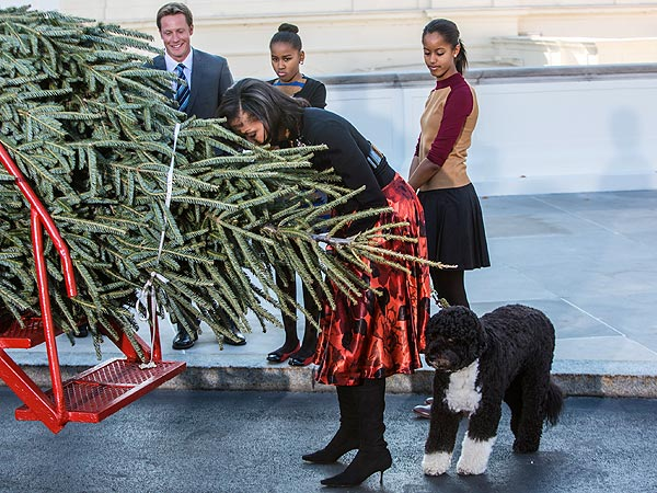 Special Delivery! Bo Obama Helps Receive White House Christmas Tree| Bo Obama, Dogs, Michelle Obama