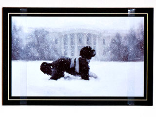 PHOTO: Bo&#39;s the Star of the White House Christmas Card | Bo Obama
