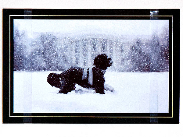White House Christmas Card Features Bo: Photo