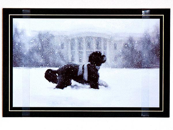 Bo Obama Adorns White House Christmas Card