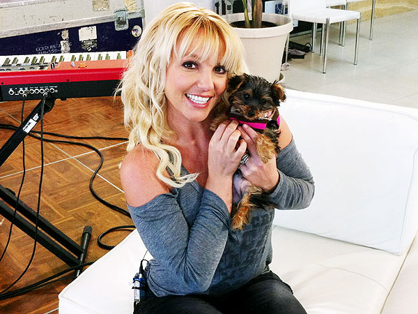 Meet Britney Spears's 'New Little Baby Girl': Hannah the Dog