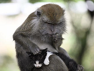 How Aww-some! Indonesian Monkey Plays Mom to Kitten
