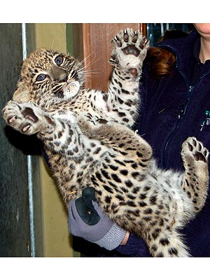 PHOTO: Baby Leopard Is Just Begging for a Hug