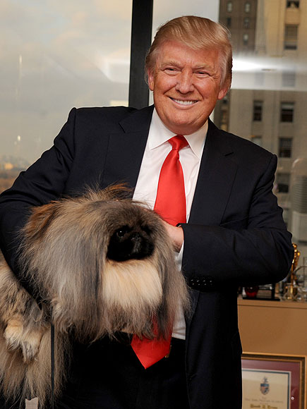 DONALD TRUMP photo | Donald Trump