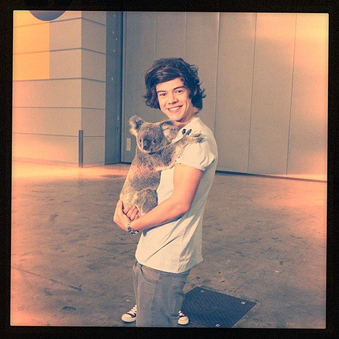 Stars and Their Pets: Harry Styles's Koala Companion