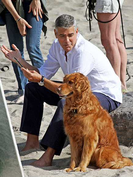 GEORGE CLOONEY photo | George Clooney