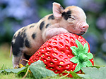 Unbearably Cute! 2012's Amazing Baby Animals