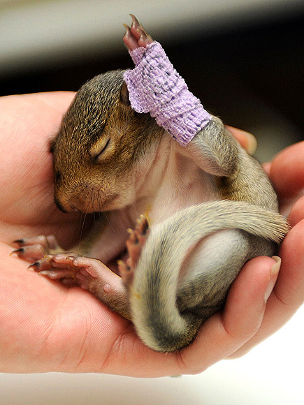 2012's Unbearably Cute Baby Animals