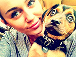 Miley's Year of the Dog | Miley Cyrus