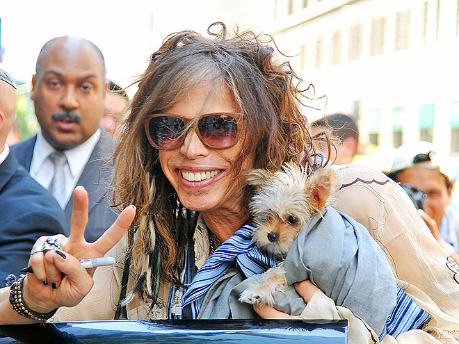 PUBLICITY HOUND photo | Steven Tyler