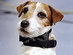 Uggie's Furry Elbows Are Covered in Celebrity Dust | Uggie