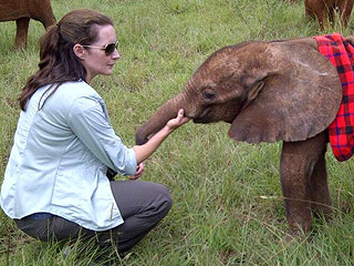 The Daily Treat: Rhinos and Elephants and Kristin Davis, Oh My