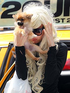 PHOTO: Amanda Bynes Hides Behind a Tiny Dog in N.Y.C. | Amanda Bynes