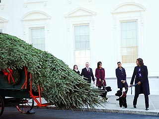 First Lady Michelle Obama Welcomes a Christmas Tree to the White House