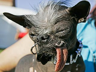 World's Ugliest Dog from 2007 Has Died