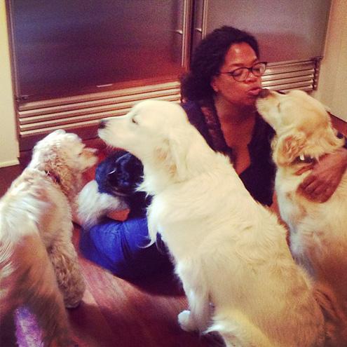Πώς δροσίζει η Όπρα τους σκύλους της;