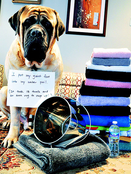 Dog Shaming Hall Of Fame Water Works Dogs Pet Photo