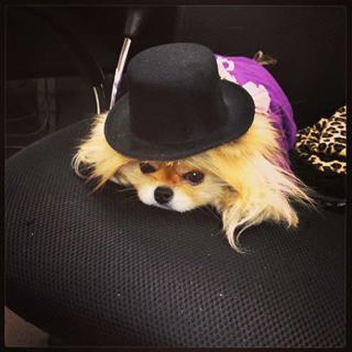 Dancing with the Stars : Gettin' Giggy with It! See how Lisa