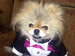 Dancing with the Stars: Gettin' Giggy with It! | Lisa Vanderpump